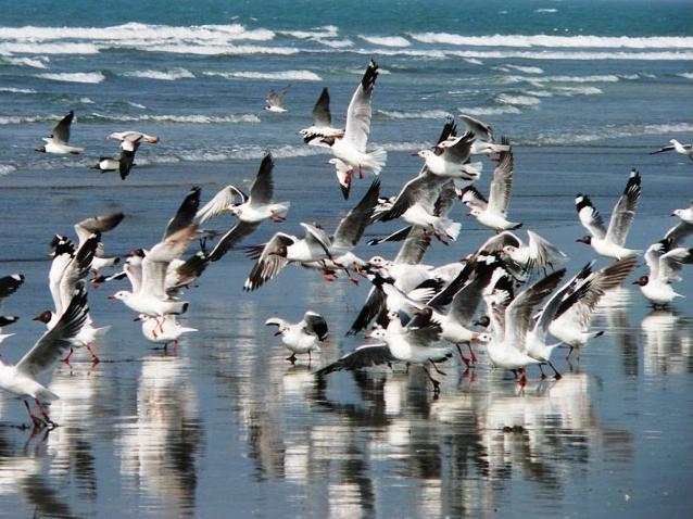 Saint Martin Island Birds
