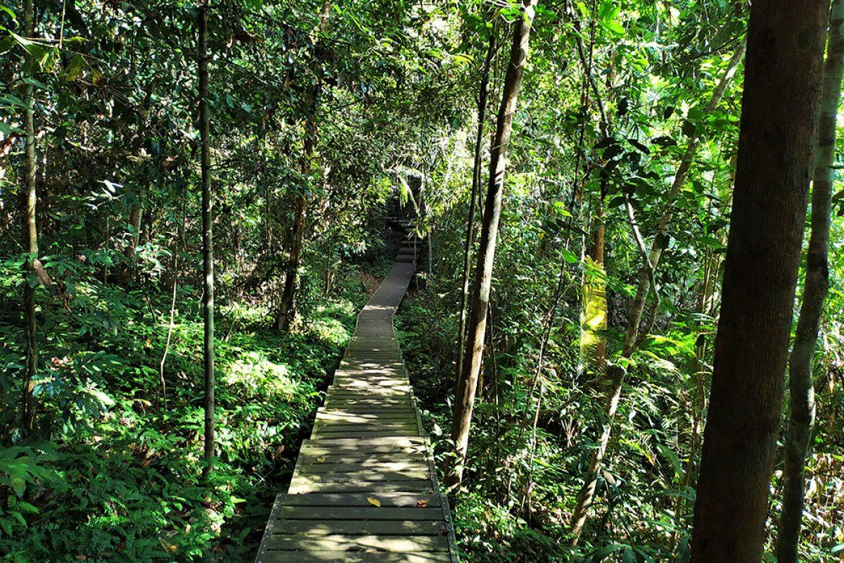 পৃথিবীর সবচেয়ে পুরাতন রেইন ফরেস্ট- তামান নেগারা